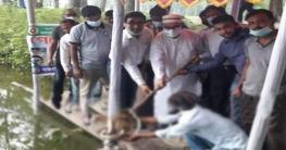 খোকসায় সরকারি পুকুরে মাছের পোনা অবমুক্তকরণ