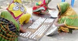 ভেড়ামারায় চলছে কুমড়ো বড়ি তৈরির উৎসব