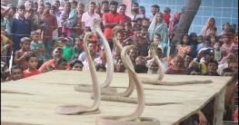 চুয়াডাঙ্গায় ঐতিহ্যবাহী সাপের খেলা অনুষ্ঠিত